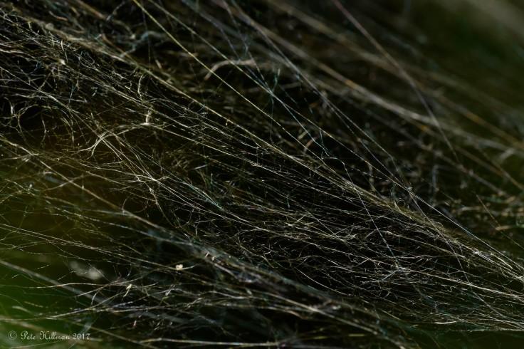 Sheet Web